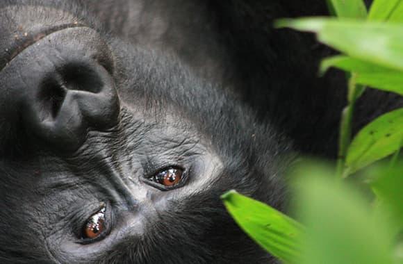 Rwanda Names 24 Gorilla Infants on World Gorilla Day!